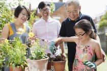 Mehrgenerationengärtnerei, Blumenkübel im sonnigen Garten — Stockfoto