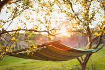 Hammock in sunny tranquil garden — Stock Photo