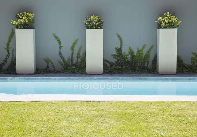 Modern lap pool against plants near wall — Stock Photo