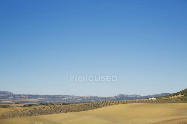 Rural landscape under blue sky — Stock Photo
