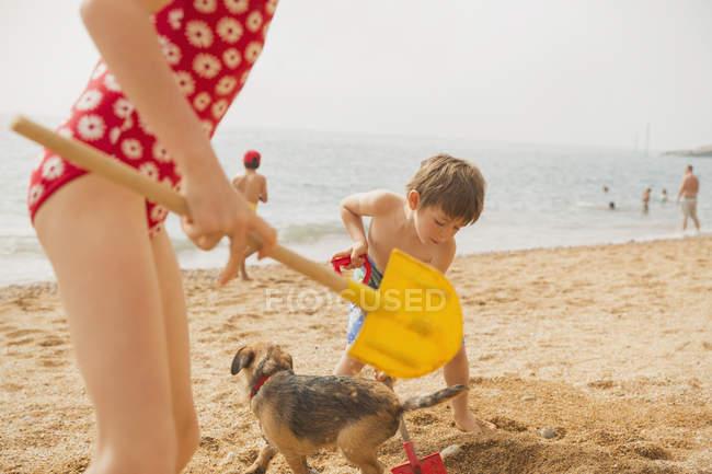 Мальчик и девочка брат и сестра играют с собакой и копаются в песке с лопатами на солнечном пляже — стоковое фото