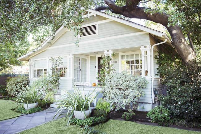 Piante e alberi intorno alla casa — Foto stock