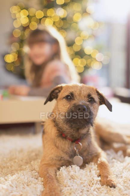 Портрет милый пес лежал на ковре в гостиной — стоковое фото