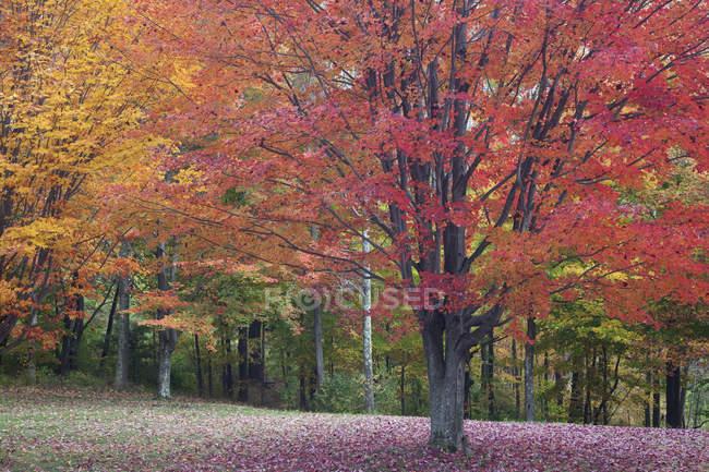 Осенние листья на деревьях в дневное время — стоковое фото