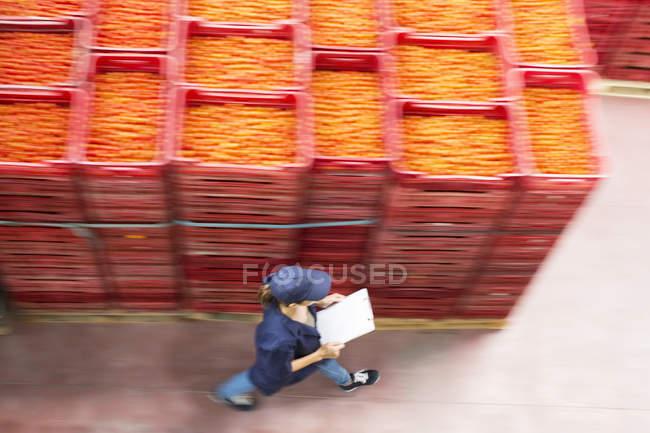 Travailleur avec presse-papiers passant devant des caisses de tomates dans une usine de transformation des aliments — Photo de stock