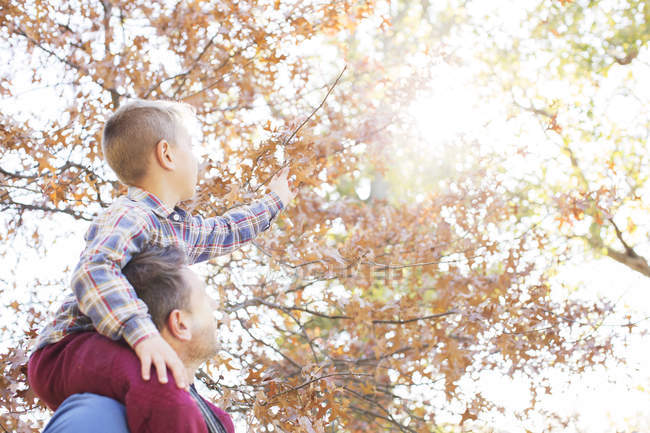 Father carrying son on shoulders reaching for autumn leaves — Stock Photo