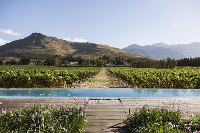 Роскошный бассейн с видом на виноградники и горы — стоковое фото