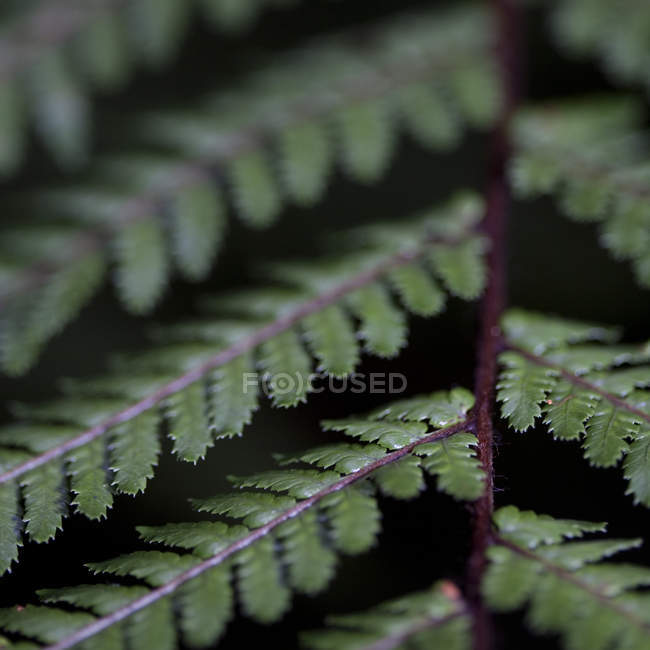 Extreme close up of green fern leaves — Stock Photo