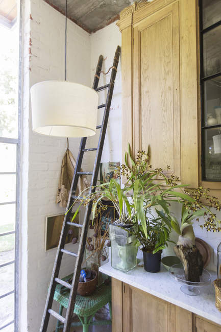 Ladder, plants and cabinets in rustic house — Stock Photo