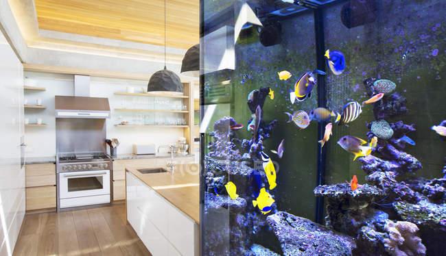 Tropical fish swimming in aquarium outside kitchen — Stock Photo