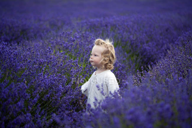 Boy walking in field of lavender — Stock Photo