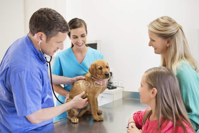 Ветеринарний лікар і господарі розглядаючи собака у ветеринарній хірургії — стокове фото