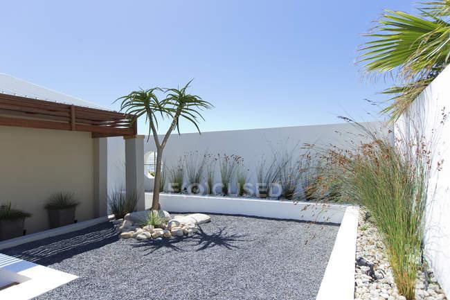 Palme im Steingarten — Stockfoto
