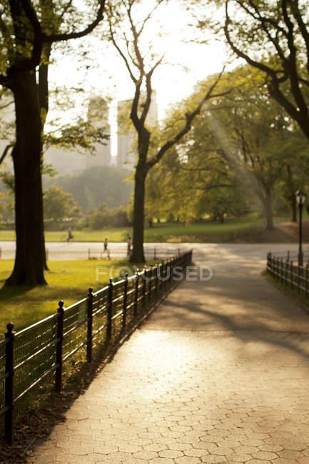 Alberi che crescono nel parco urbano — Foto stock