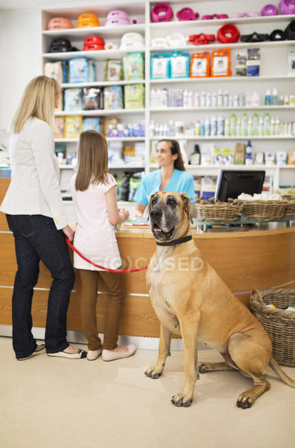 Owners bringing dog to veterinary surgery — Stock Photo