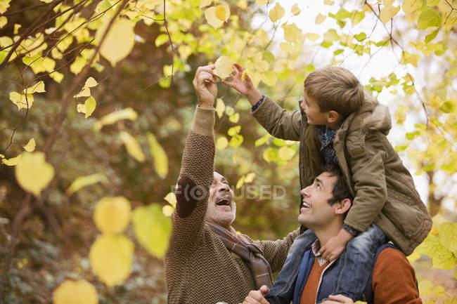 Three generations of men admiring leaves — Stock Photo
