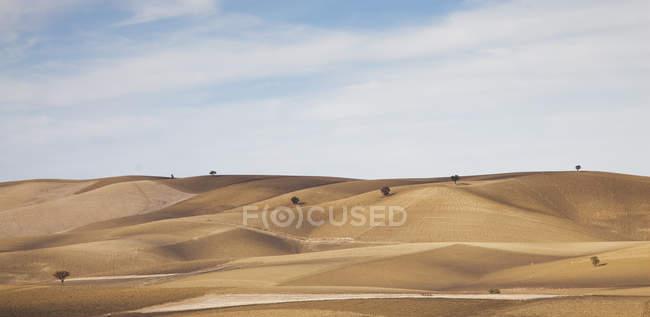 Arbres poussant dans un paysage rural sec — Photo de stock
