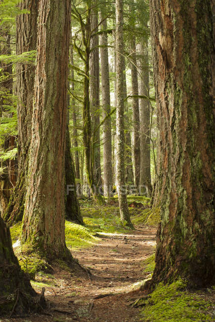 Dirt path in forest  during daytime — Stock Photo