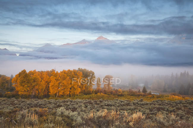 Mist over rural landscape — Stock Photo