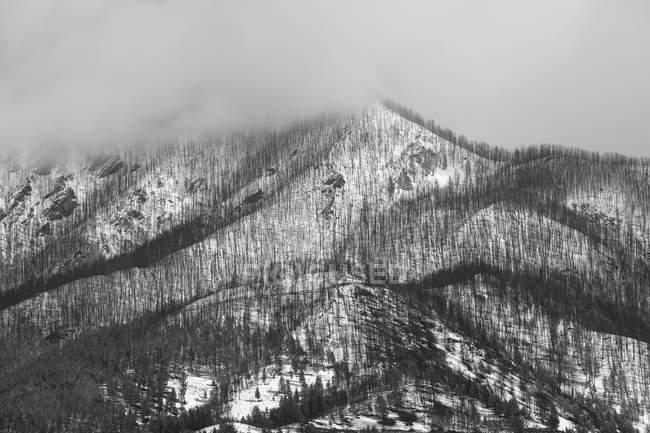 Bäume wachsen am schneebedeckten Berghang — Stockfoto
