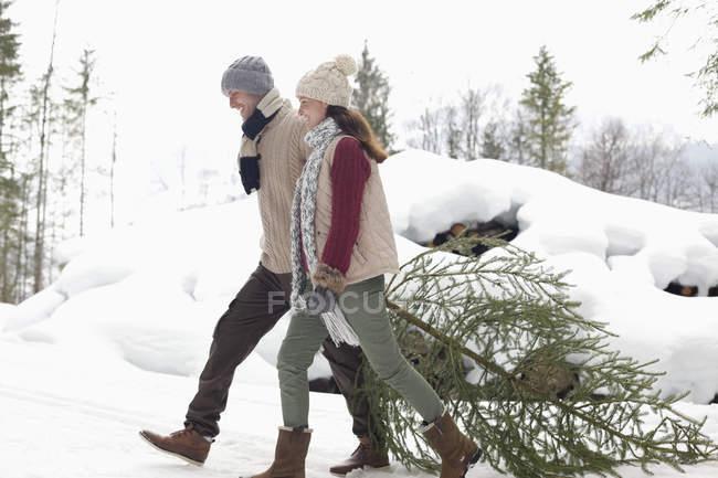 Coppie felici trascinando fresco albero di Natale nella neve — Foto stock