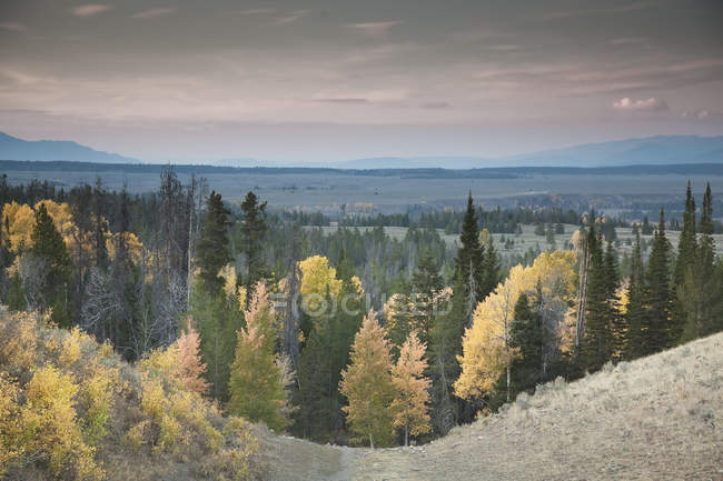 Autumn trees in rural landscape — Stock Photo