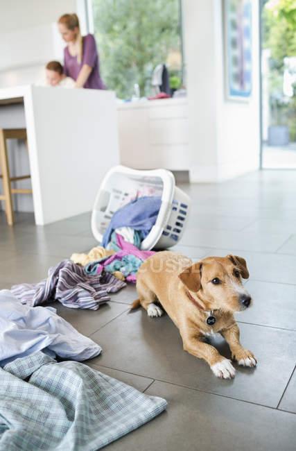 Dog sitting by spilled laundry basket — Stock Photo