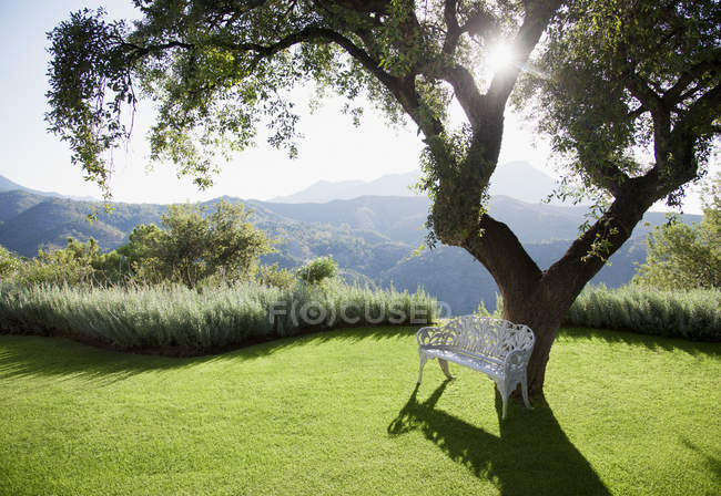 Sun shining behind tree with mountains in background — Stock Photo