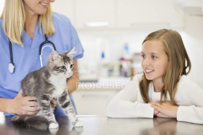 Veterinarian examining cat in veterinary surgery — Stock Photo