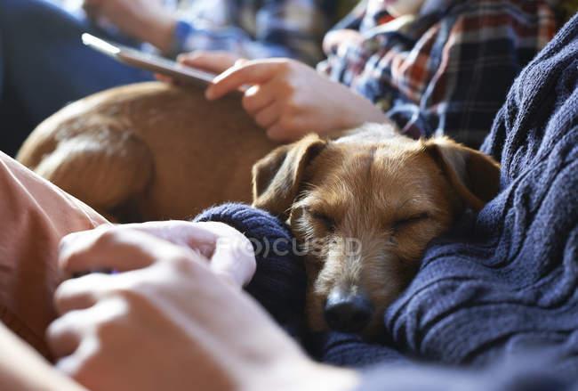 Вид крупным планом собаки, спящей на коленях владельцев — стоковое фото