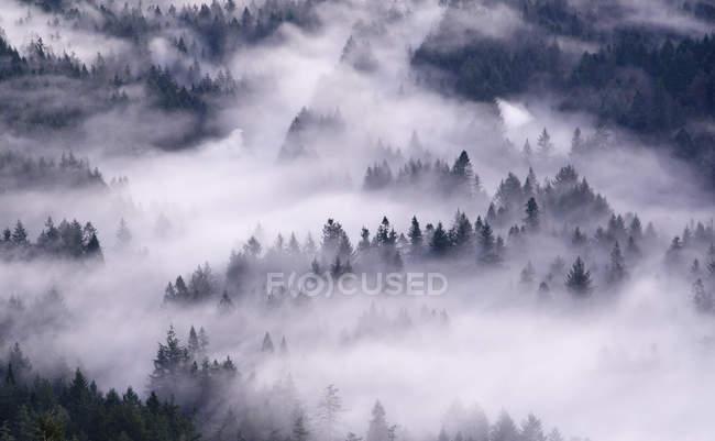Vista aérea de balanceo sobre bosque de niebla - foto de stock
