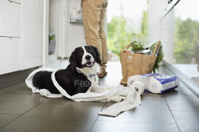 Dog unrolling toilet paper on floor at modern home — Stockfoto