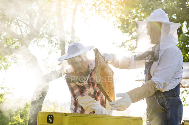 Beekeepers in protective clothing examining beehive — Stock Photo