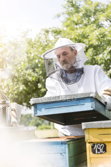 Beekeeper in protective clothing carrying removing beehive lid — Stock Photo