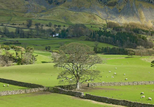 Árvore em pastos verdes na paisagem rural — Fotografia de Stock