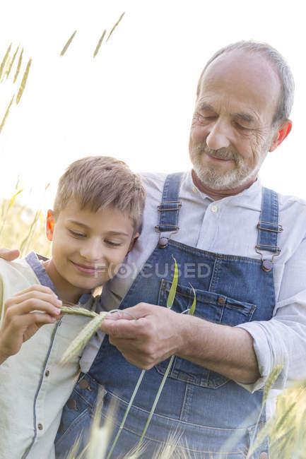 Grandfather farmer showing grandson wheat stalk — Stock Photo