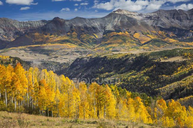 Arbres de l'automne jaunes sur une colline ensoleillée des montagnes, Sunshine, Colorado, Etats-Unis — Photo de stock