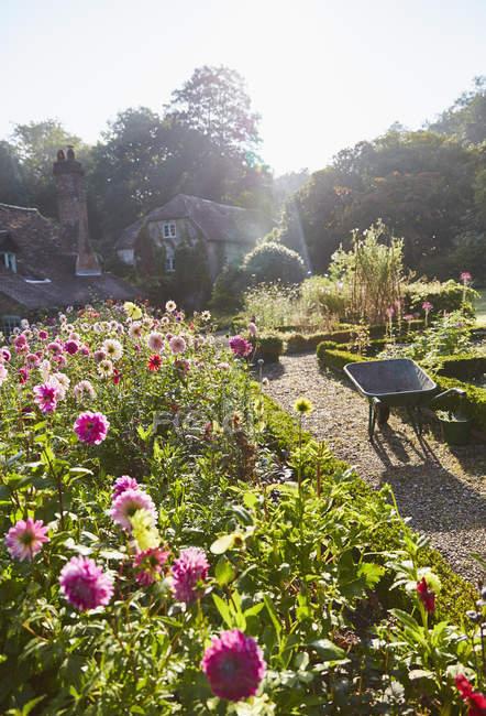 Flowers growing in sunny garden — Stock Photo