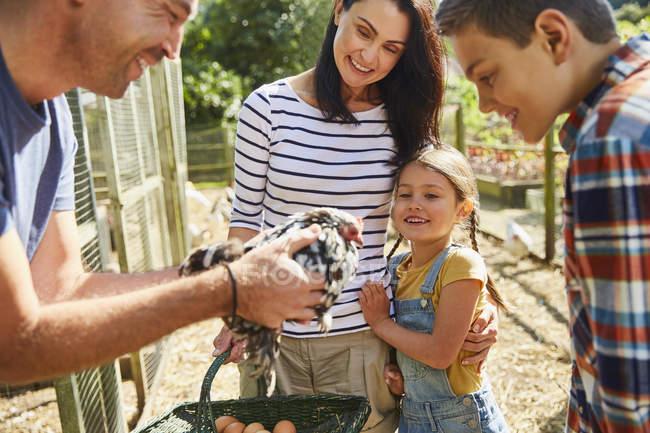 Famille récolte des oeufs frais de poulet — Photo de stock
