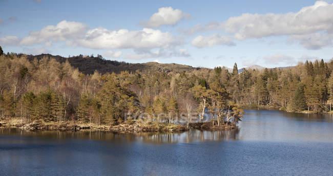Деревья, растущие вдоль сельских озеро — стоковое фото