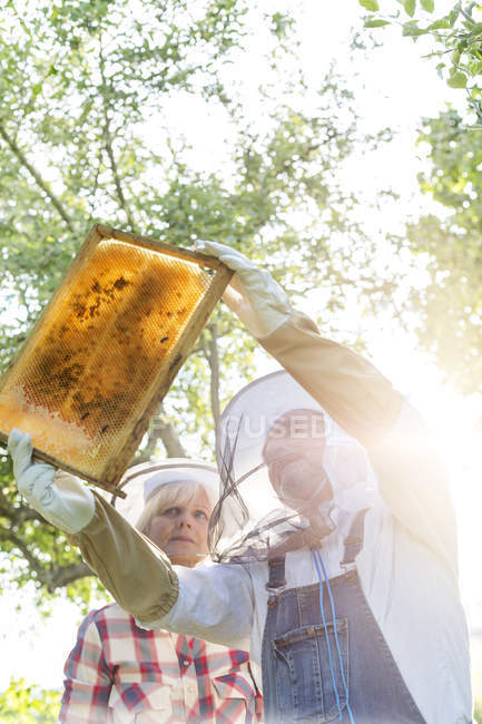 Beekeepers in protective clothing examining bees on honeycomb — Stock Photo
