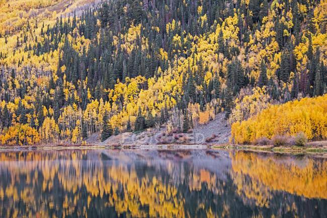 Reflet des arbres de l'automne jaunes sur flanc de colline dans le lac tranquil, Crystal, Ouray, Colorado, États-Unis — Photo de stock