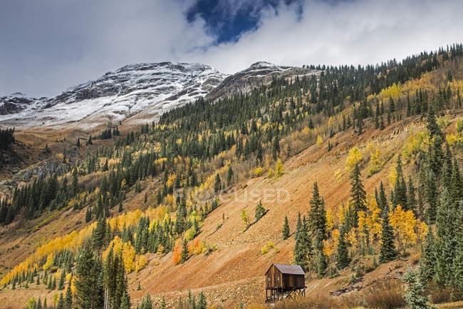 Arbres de l'automne sur la colline distante, Red Mountain Pass, Colorado, États-Unis — Photo de stock