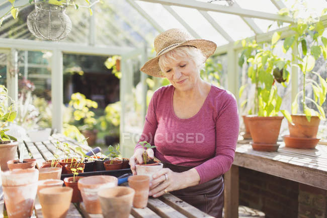 Senior woman potting plants in greenhouse — Stock Photo