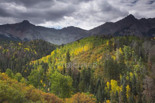 Grüne und gelbe Herbst Bäume auf Berg Hügel, West Fork Dallas Creek, Colorado, Vereinigte Staaten — Stockfoto