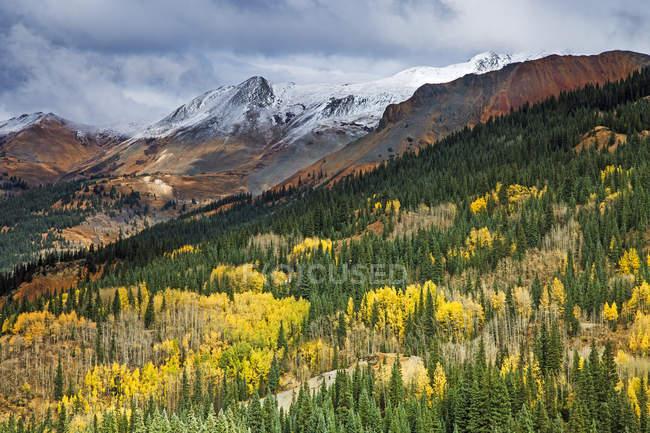 Arbres de l'automne jaunes sur colline au-dessous de montagnes aux sommets enneigés, Red Mountain Pass, Colorado, États-Unis — Photo de stock