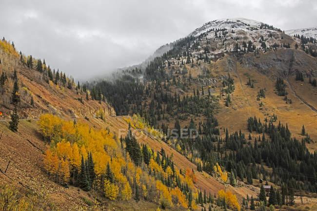 Arbres de l'automne sur la colline distante, près de Silverton, Colorado, États-Unis — Photo de stock