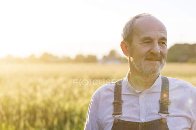 Gros plan senior agriculteur dans le champ de blé rural ensoleillé — Photo de stock