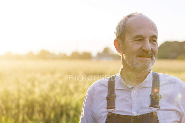 Close up senior farmer in sunny rural wheat field — Stock Photo