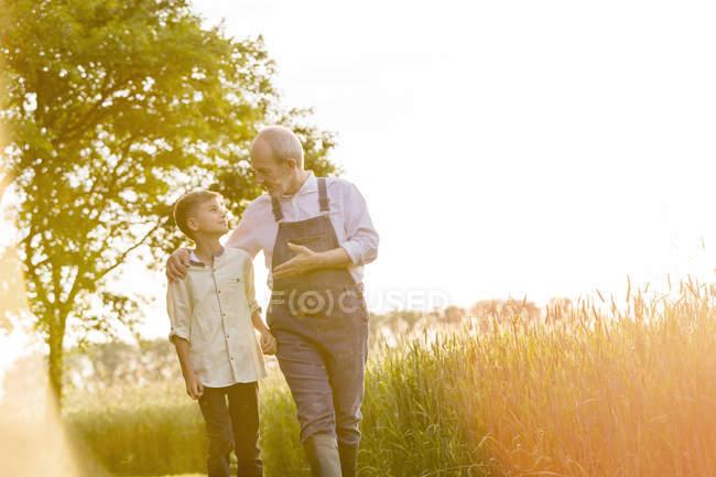 Grand-père agriculteur parler à petit-fils dans le champ de blé rural ensoleillé — Photo de stock